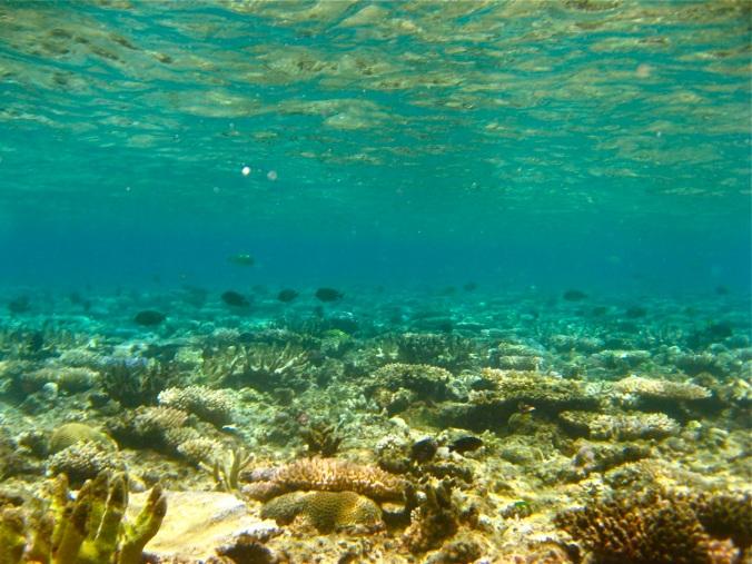 ocean reef